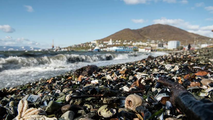Эксперт рассказал о сроках восстановления экосистемы на Камчатке