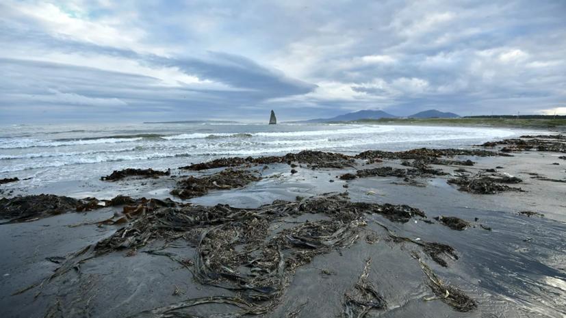 СК назвал основную причину загрязнения залива на Камчатке