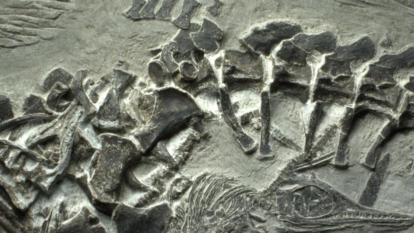 На острове Русский нашли останки ихтиозавра