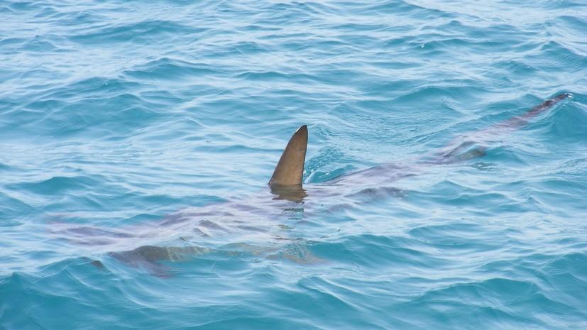 Акула напала на украинцев в Египте
