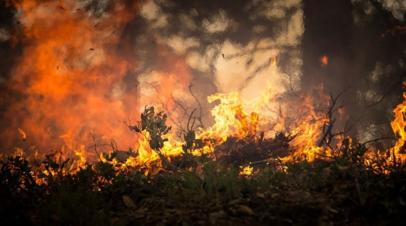 Площадь природных пожаров в Воронежской области достигла почти 360 га