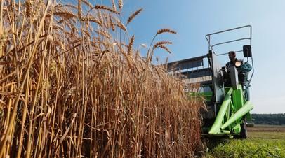 Хлебный ориентир: как рекордный рост цен на пшеницу может отразиться на стоимости мучных изделий в России