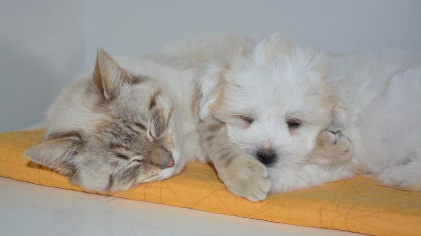 В НИИ заявили, что кошки и собаки могут заболевать COVID ...