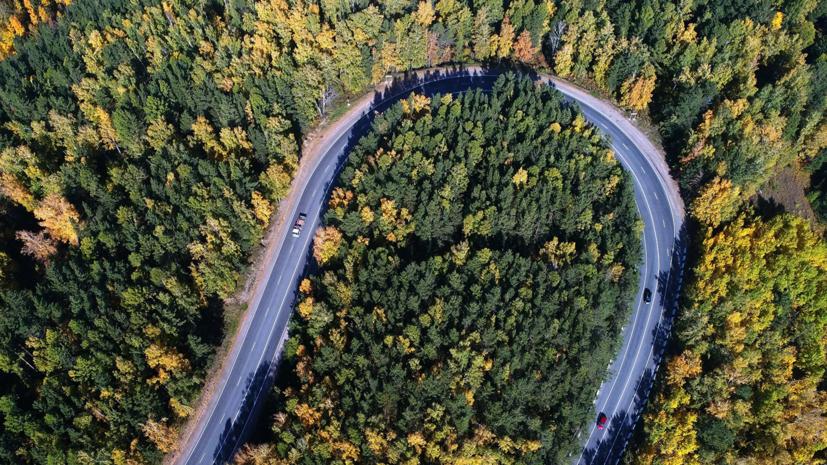 Путин поручил к 2023 году запустить инфосистему лесного комплекса