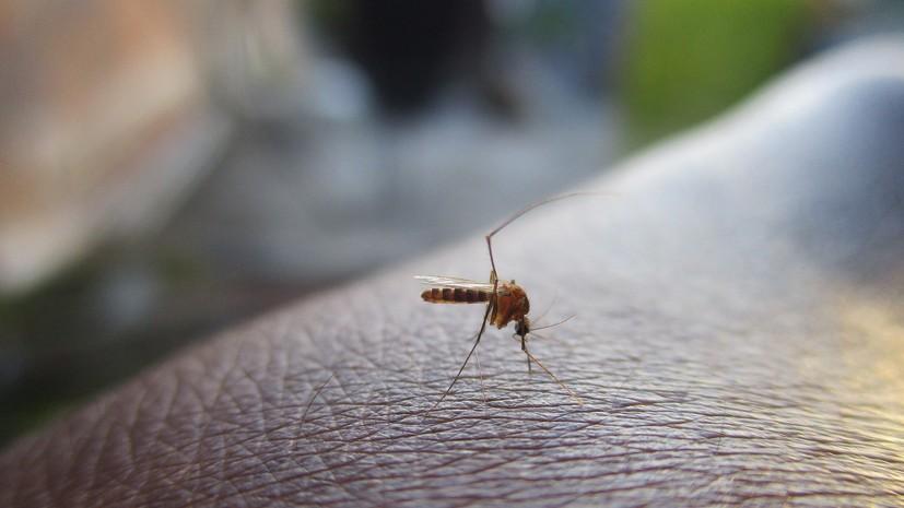 В Роспотребнадзоре назвали срок жизни COVID-19 в комарах
