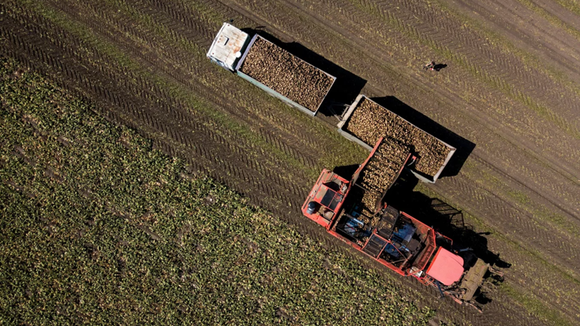 В Адыгее планируют сделать виноградарство приоритетным направлением развития АПК