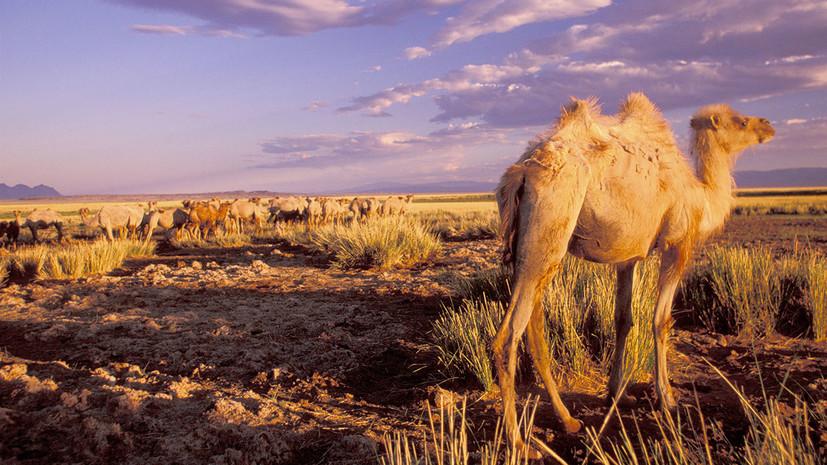Безжизненная пустыня: почему климат Монголии становится необратимо жарким и сухим