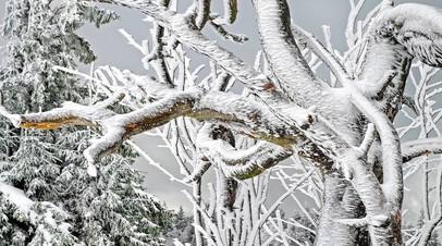 Во Владивостоке из-за непогоды повалено более 4500 деревьев