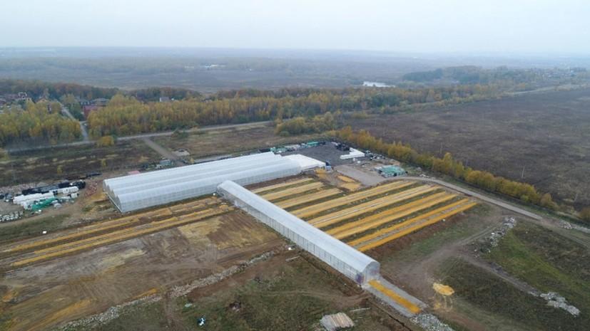 В Раменском открылся новый тепличный комплекс