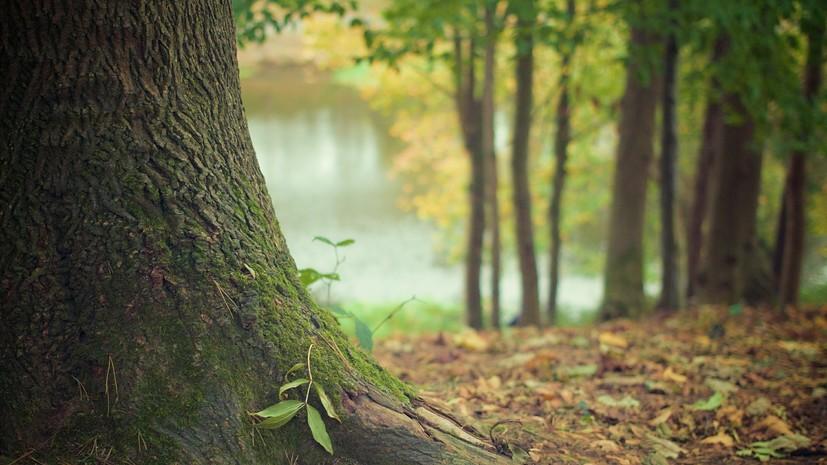 В 2020 году в Подмосковье восстановили более 2,5 тысячи гектар леса