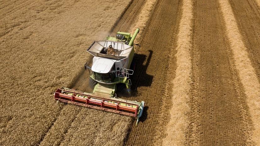 В Калининградской области отчитались об урожае зерна и рапса