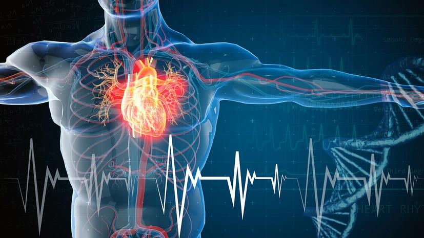 Без шока и боли: российские исследователи разработали щадящий метод лечения сердечных аритмий
