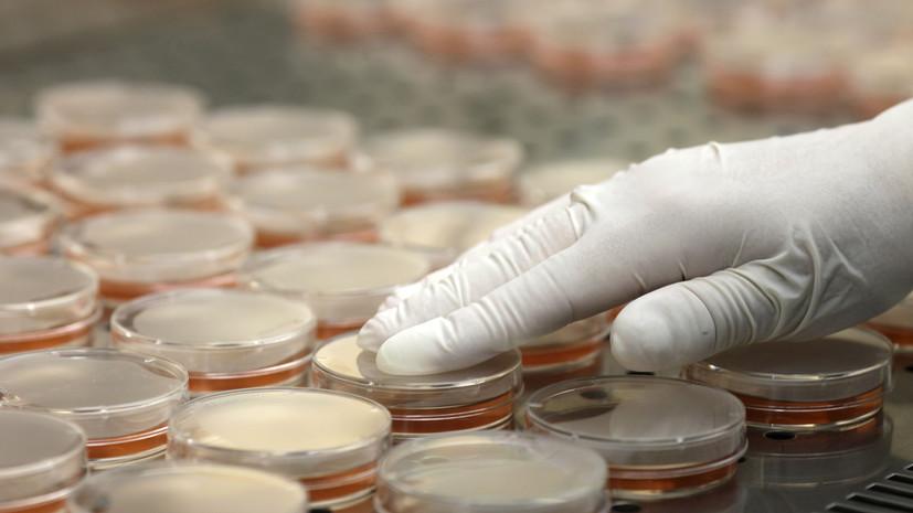Битва за эффективность: российские учёные разработали стратегию борьбы с устойчивыми к антибиотикам бактериями
