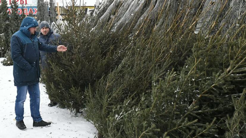 В Роскачестве дали советы по выбору новогоднего дерева