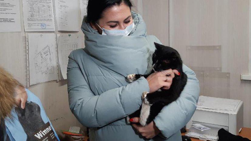 В Ульяновской области спасённый кот получил «должность» в министерстве