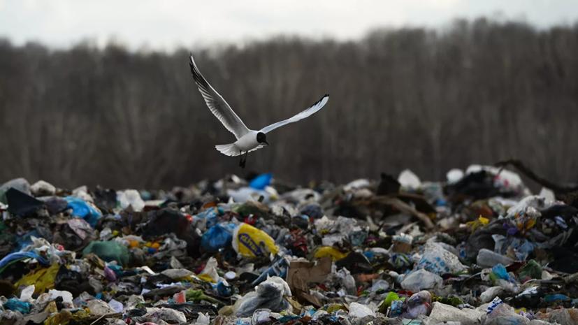 В Подмосковье сообщили о закрытии последнего мусорного полигона