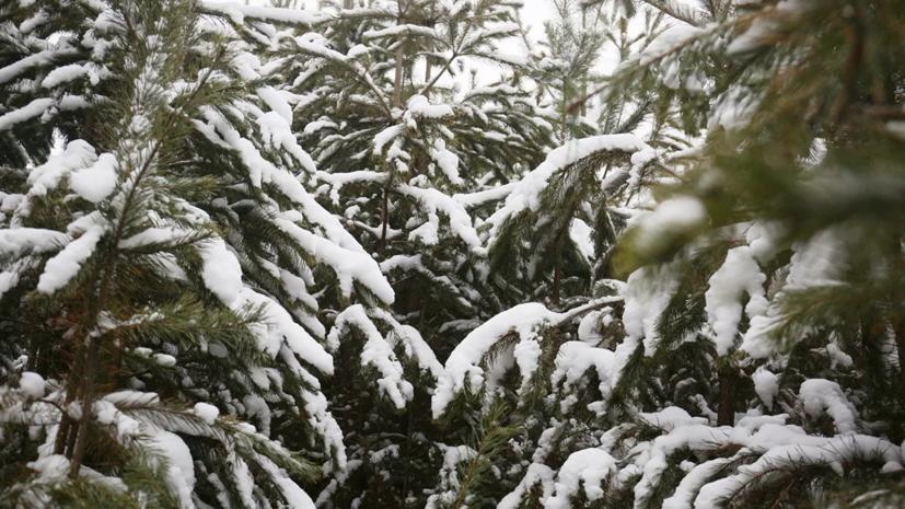 Эксперты назвали города России с самыми высокими новогодними ёлками