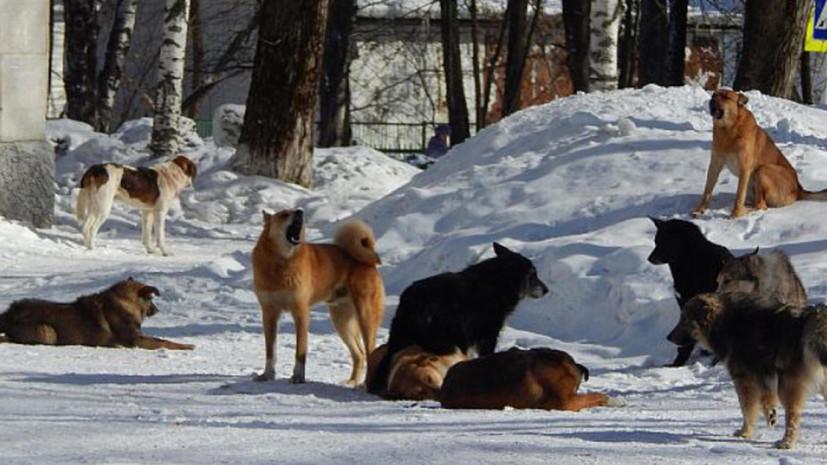 В Кировской области сотрудник УФСИН спас женщину с ребёнком от собаки