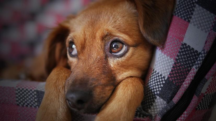 Кинологи рассказали, как помочь собаке справиться со стрессом в новогодние праздники