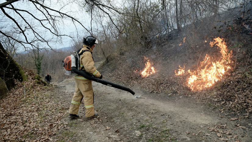 В Сочи завели дело об уничтожении имущества после лесных пожаров