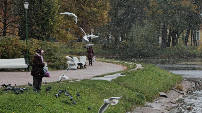 В Петербурге модернизируют пространство оранжерей Таврического сада