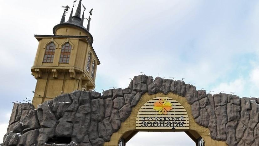 Реконструкцию пешеходного моста в Московском зоопарке планируют завершить в 2021 году