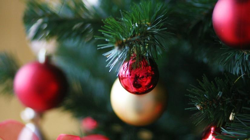 Эксперт рассказал, как долго можно хранить новогоднюю ель