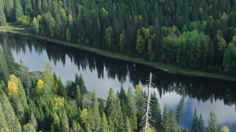 В Татарстане рассказали о планах по восстановлению лесов в 2021 году