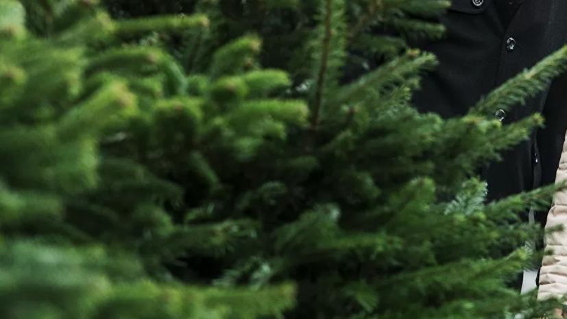 В Воронеже начали переработку новогодних ёлок