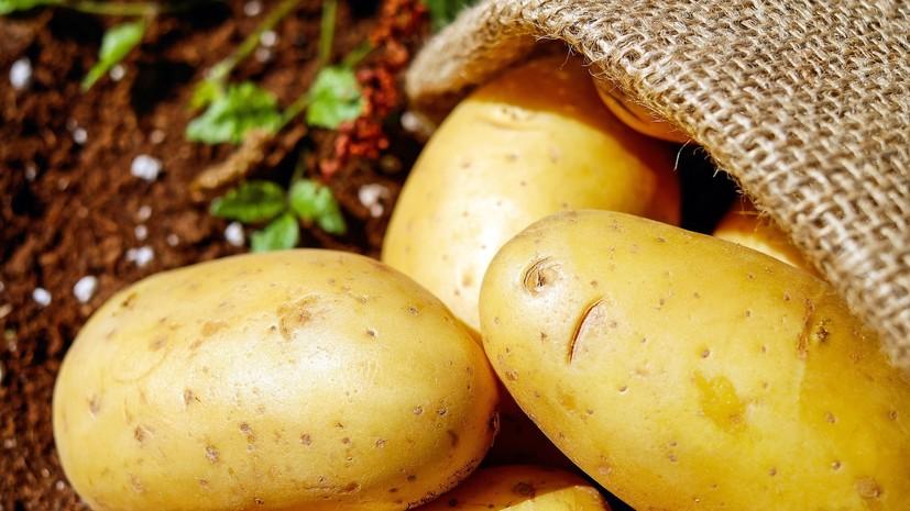 Экономист прокомментировал идею продавать картофель «экономкласса»