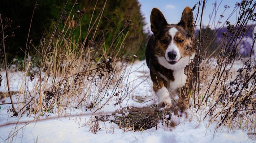 Ветврач рассказал о правилах выгула собак в холодную погоду