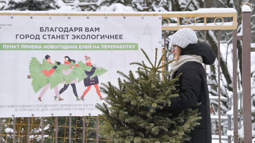 В Подмосковье с начала года сдали на переработку более 42 тысяч ёлок