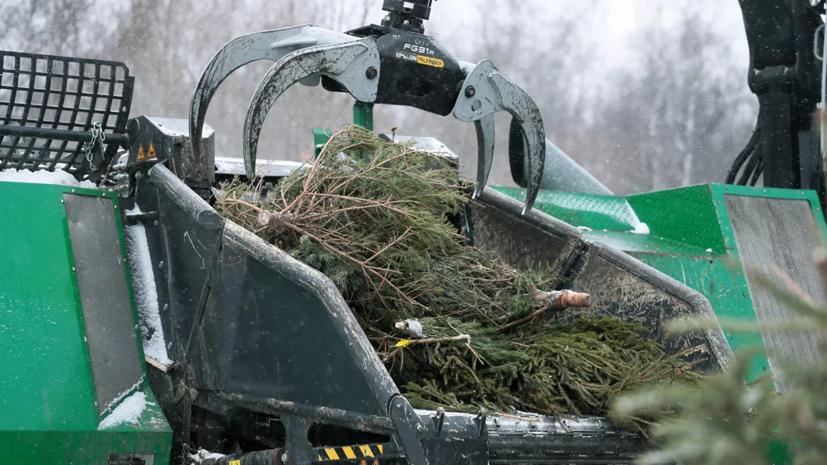 В Подмосковье сдали на переработку более 50 тысяч ёлок