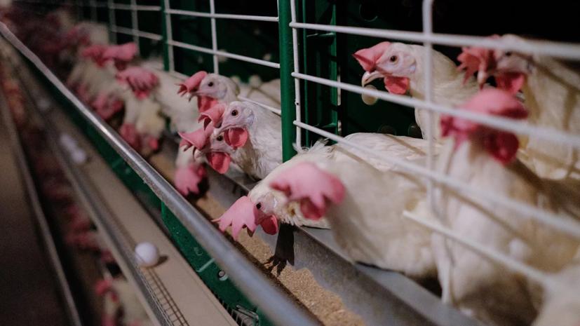 В центре«Вектор» прокомментировали выявление птичьего гриппа в России