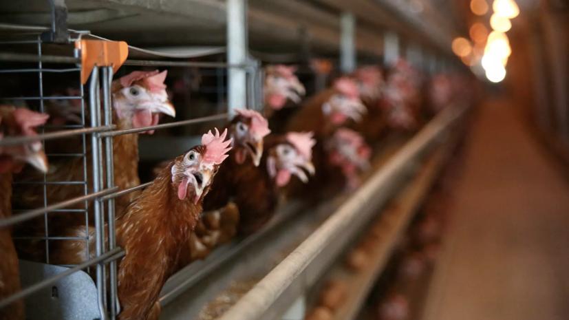 Вирусолог рассказал о мерах профилактики птичьего гриппа