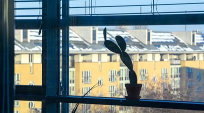 Эксперты заявили о росте интереса россиян к покупке комнатных растений