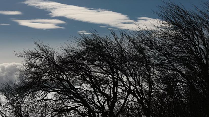 Синоптики предупредили о порывистом ветре в Мурманской области