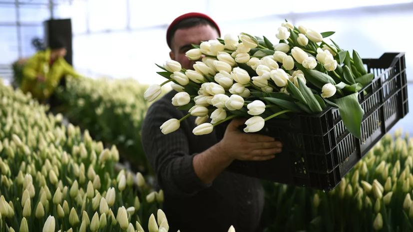 Эксперты прокомментировали цены на цветы к 8 Марта