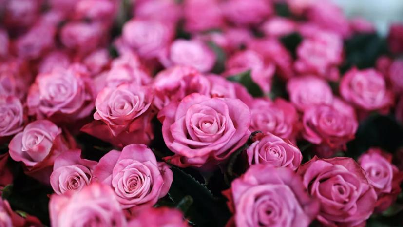 В Краснодаре с 6 по 8 марта организуют цветочные ярмарки