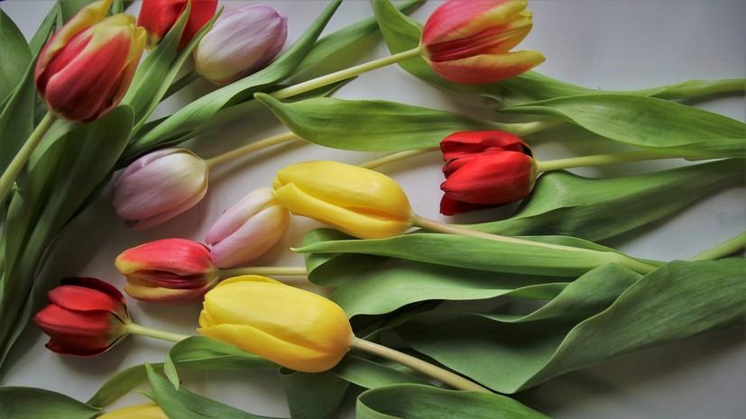 На таможне Подмосковья оформили 100 млн цветов с начала февраля