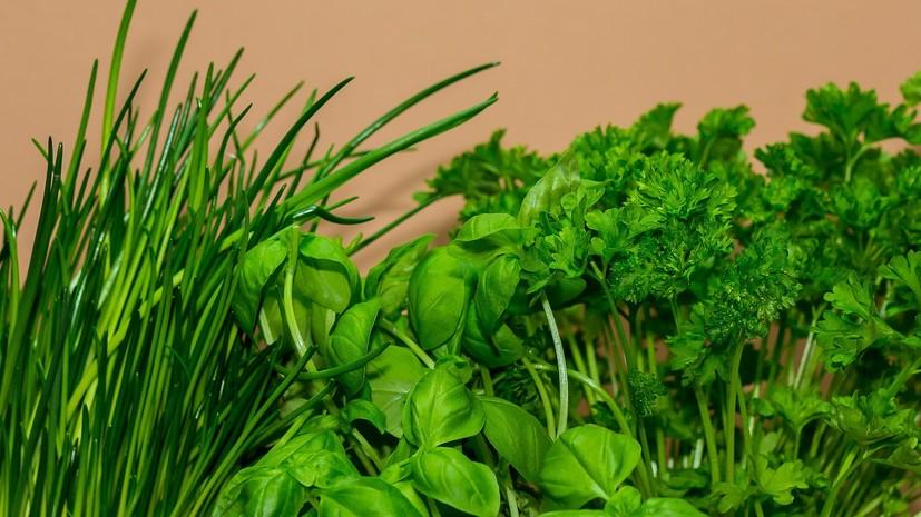 Эксперт рассказала о правилах употребления свежей зелени