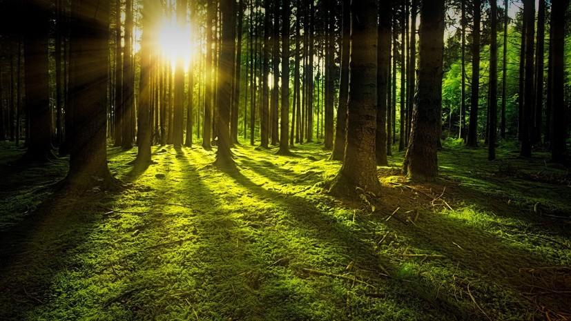 В Оренбургской области рассказали о работе по восстановлению лесов