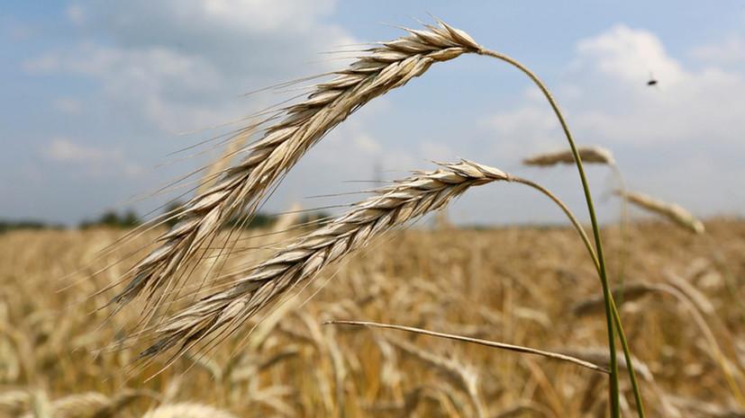 Украина запретила ввоз из России пшеницы, подсолнечного масла и бумаги