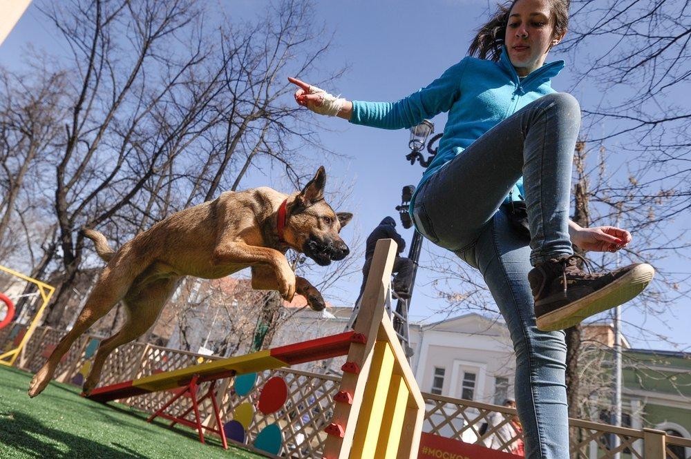 «Против безответственного обращения»: в Госдуму внесли закон об обязательной регистрации домашних животных1