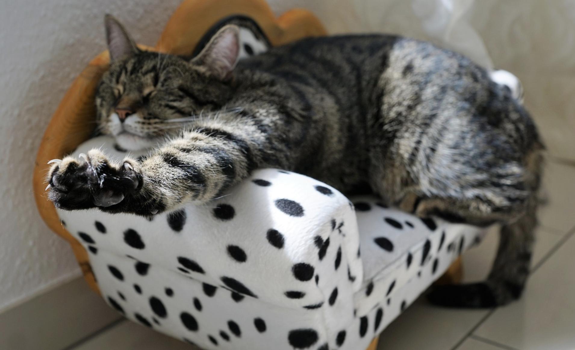 «Против безответственного обращения»: в Госдуму внесли закон об обязательной регистрации домашних животных2