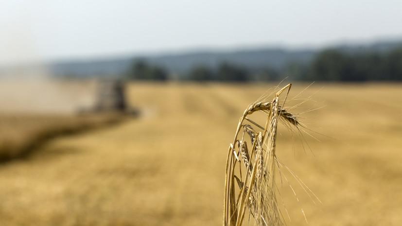 В Подмосковье проверят около девяти тысяч неиспользуемых участков сельхозназначения