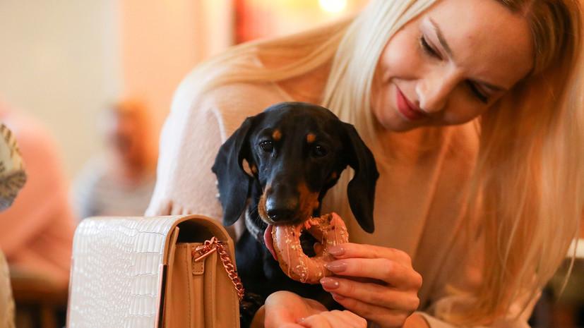 В ГД внесён проект о полномочиях кабмина касательно вопроса посещения кафе с животными