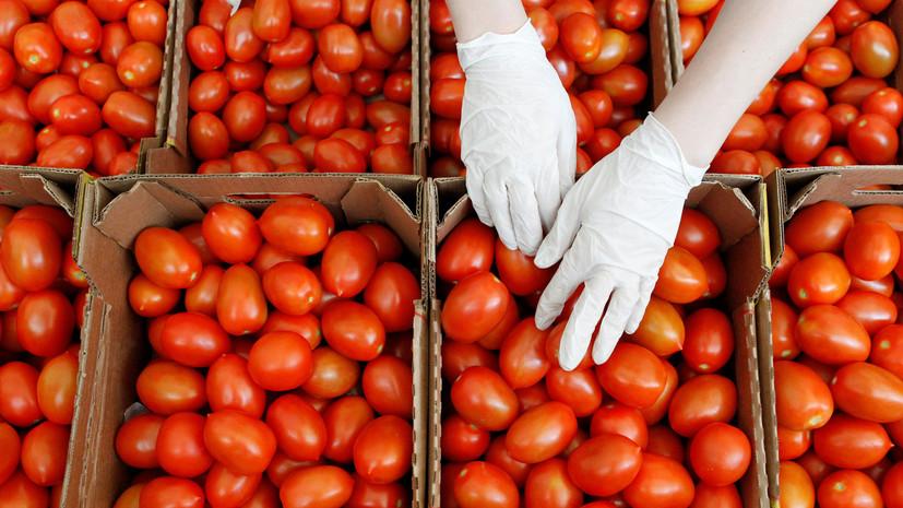 Россельхознадзор разрешил ввоз томатов с семи предприятий Азербайджана