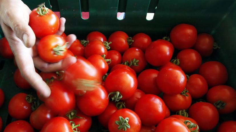 Россельхознадзор разрешил ввоз томатов и перцев с нескольких предприятий Узбекистана