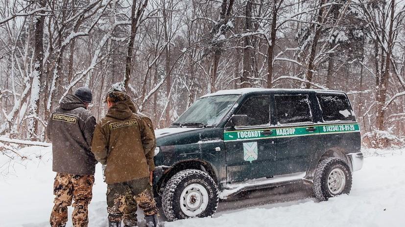 Прокуроры начали проверку после гибели амурского тигра в Хабаровском крае